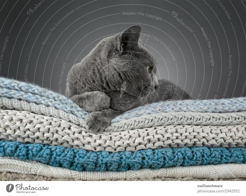Relax Katze Farbe schön Erholung Tier ruhig Lifestyle Stimmung Häusliches Leben Wohnung Zufriedenheit elegant Idylle authentisch beobachten Neugier