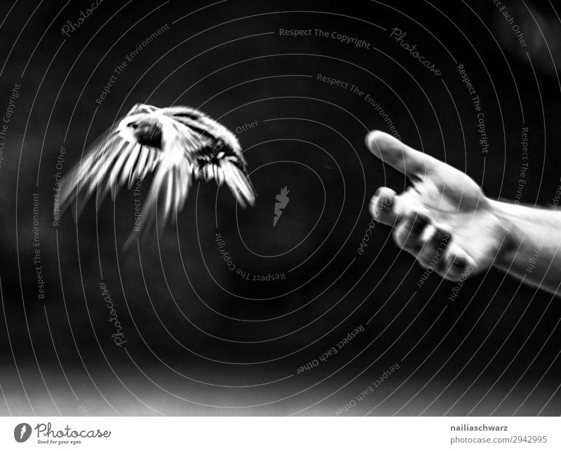 Mauersegler Sommer Hand Finger Umwelt Natur Tier Wildtier Vogel 1 Tierjunges festhalten fliegen genießen Fröhlichkeit nah natürlich niedlich Glück Zufriedenheit