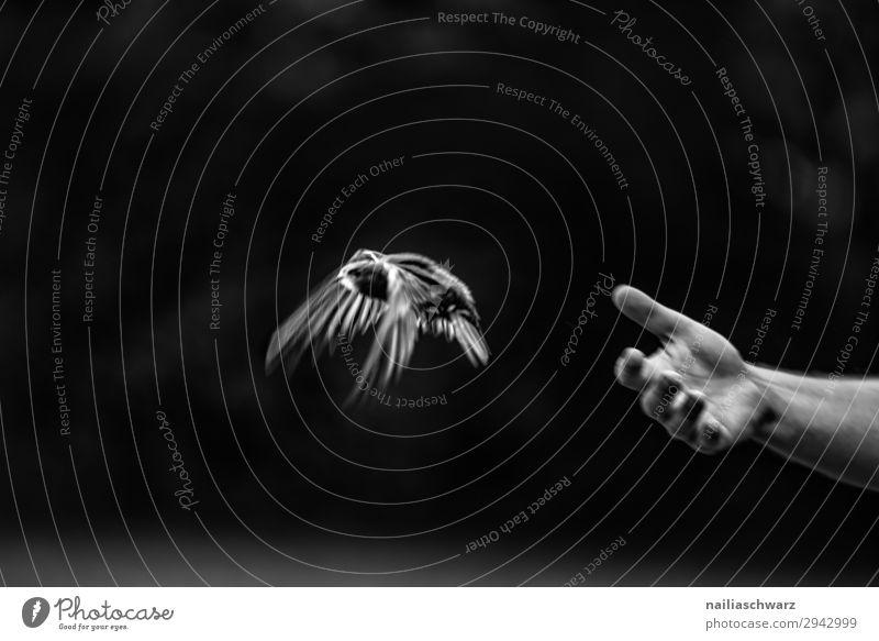 Mauersegler Sommer Mensch Hand Finger Umwelt Natur Tier Vogel 1 Tierjunges fliegen frei Glück Unendlichkeit natürlich Geschwindigkeit Stimmung Freude