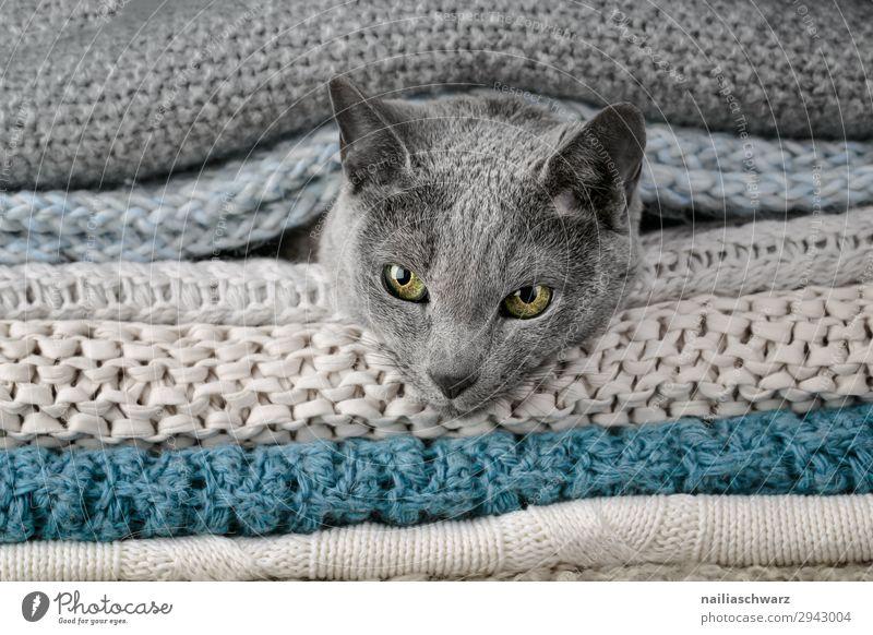 Russisch Blau Katze Lifestyle elegant Erholung Häusliches Leben Herbst Winter Tier Haustier Tiergesicht russisch blau 1 Decke Textilien Strickmuster Seil