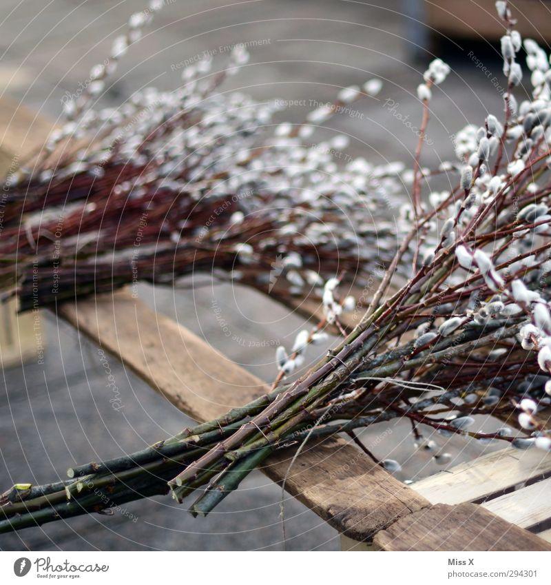Weidenkätzle Ostern Frühling Pflanze Sträucher Blüte Blühend weich Weidenkätzchen Sal-Weide Ast Zweig Wochenmarkt verkaufen Bündel Blumenhändler Blumenstrauß