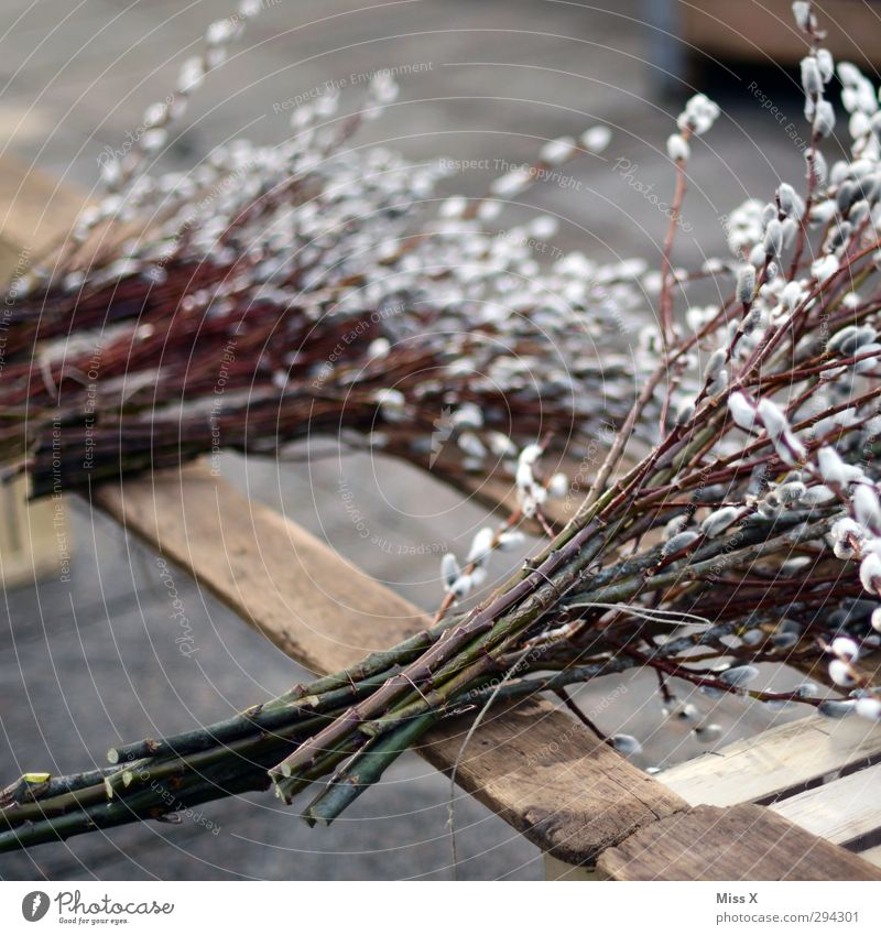 Weidenkätzle Pflanze Frühling Blüte Sträucher weich Ast Ostern Blühend Blumenstrauß Zweig verkaufen Bündel Blumenhändler Frühlingsblume Weidenkätzchen Wochenmarkt