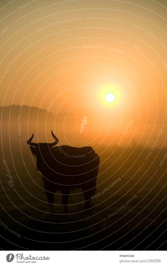 Serengeti Ferien & Urlaub & Reisen Sommer Sonne Tier Erholung Wiese Gefühle Horizont träumen Stimmung Klima Schönes Wetter Wüste Tiergesicht Afrika Ring