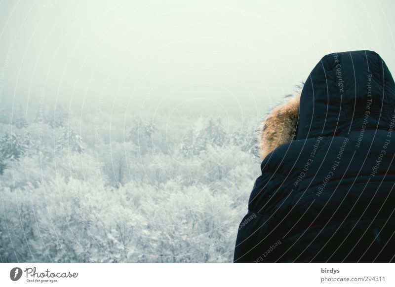 Rückblick Mensch Natur Landschaft ruhig Winter Wald Ferne kalt Schnee oben Eis Nebel Idylle beobachten Frost Aussicht