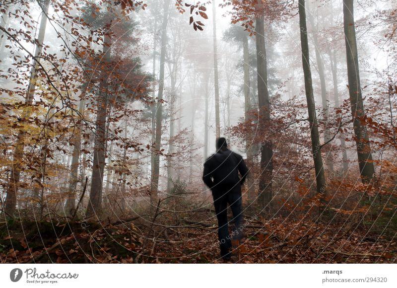 Into the Wild Mensch Natur Pflanze Landschaft Wald Erwachsene Umwelt Herbst Frühling Bewegung Wege & Pfade Stimmung gehen Wetter Klima Nebel