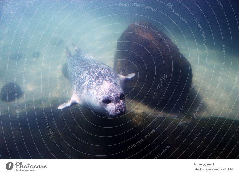 Vor blau grün schön Wasser Tier schwarz Leben lustig grau Schwimmen & Baden braun elegant nass Geschwindigkeit ästhetisch Tiergesicht