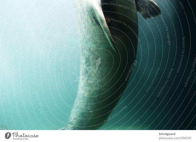 Hoch blau grün schön Wasser Tier schwarz Leben grau Schwimmen & Baden elegant nass ästhetisch Jagd türkis beweglich Aquarium
