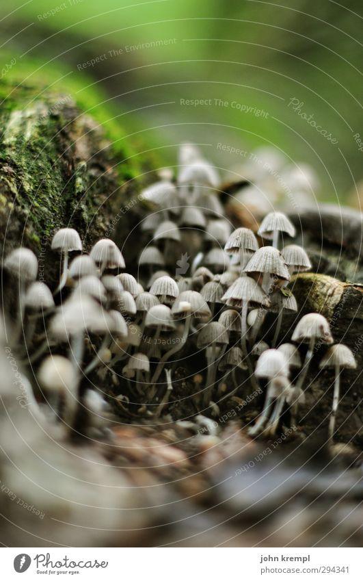 Kann man auch rauchen Natur Erde Moos Wurzel Pilzhut Park Wald grau grün Neugier Beginn Endzeitstimmung Idylle Wachstum Wandel & Veränderung Märchenwald