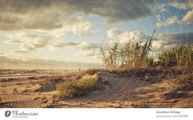 Korsika XXXIV Ferien & Urlaub & Reisen Freiheit Sommer Sommerurlaub Sonnenbad Strand Meer Insel Wellen Umwelt Natur Landschaft Lebensfreude Baum Wellness