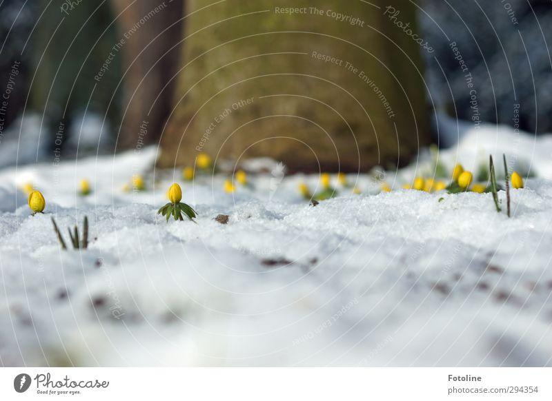 Und wieder Schnee! :-( Umwelt Natur Landschaft Pflanze Urelemente Winter Eis Frost Baum Blume Blüte Garten Park Coolness kalt nass natürlich braun gelb grün