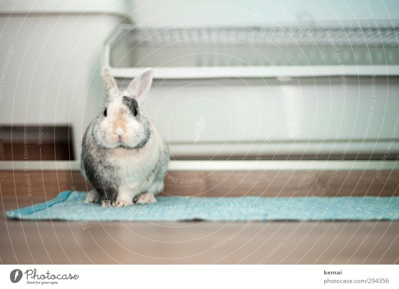 Wer sich zuerst bewegt, verliert Tier ruhig sitzen niedlich Ostern Fell Tiergesicht Gelassenheit Haustier Wachsamkeit Hase & Kaninchen Pfote Krallen Osterhase Hasenohren Zwergkaninchen