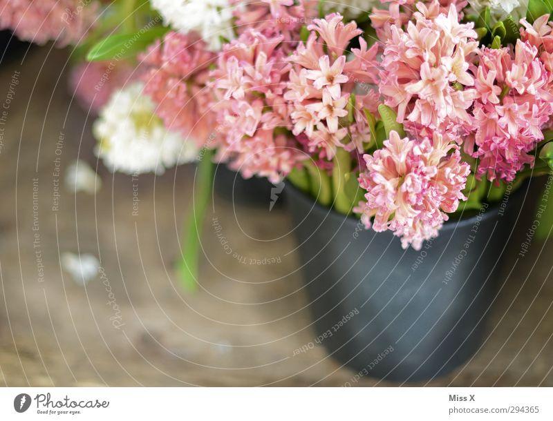 Hyazinthen Frühling Blume Blatt Blüte Blühend Duft rosa Blumenstrauß verkaufen Blumenhändler Eimer Vase Farbfoto mehrfarbig Nahaufnahme Menschenleer