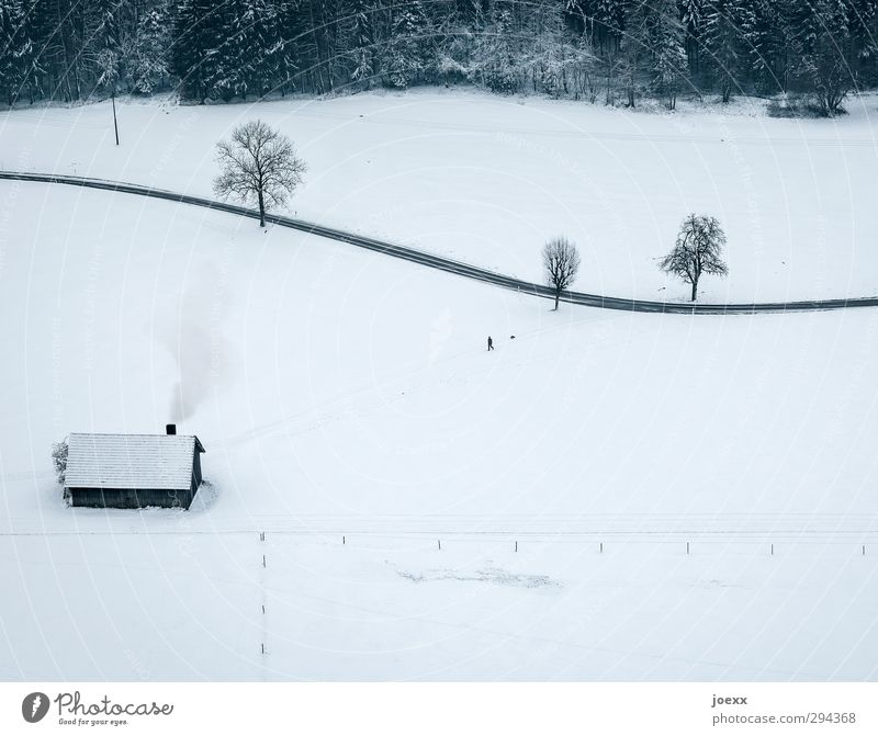 Mein Haus, mein Garten, mein Hund. 1 Mensch Landschaft Winter Schnee Baum Wald Hütte Schornstein Fußgänger Straße Wege & Pfade Haustier Tier gehen grau schwarz