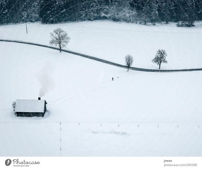 Mein Haus, mein Garten, mein Hund. Mensch Hund weiß Baum Einsamkeit Landschaft Haus Tier Winter Wald schwarz kalt Straße Wege & Pfade Schnee grau