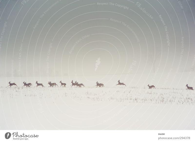 Rehformation Jagd Winter Schnee Umwelt Natur Landschaft Tier Urelemente Himmel Wolkenloser Himmel Nebel Feld Wildtier Tiergruppe Herde rennen authentisch kalt