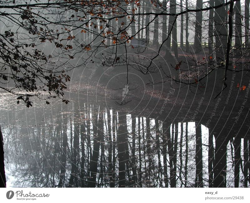Fischteich Kreis Borken Baum Teich Forelle Spiegelung im Wasser