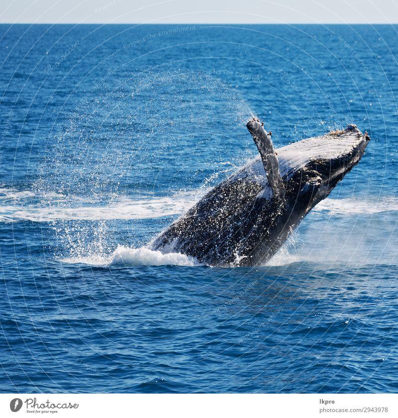 Ferien & Urlaub & Reisen Natur blau schön weiß Meer Tier Umwelt natürlich Freiheit wild springen Insel groß beobachten Jahreszeiten