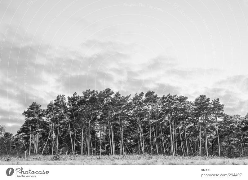 Dunkler Hain Winter Schnee Umwelt Natur Landschaft Himmel Wolken Baum Wald Traurigkeit authentisch dunkel kalt Trauer nachhaltig Wachstum Wandel & Veränderung