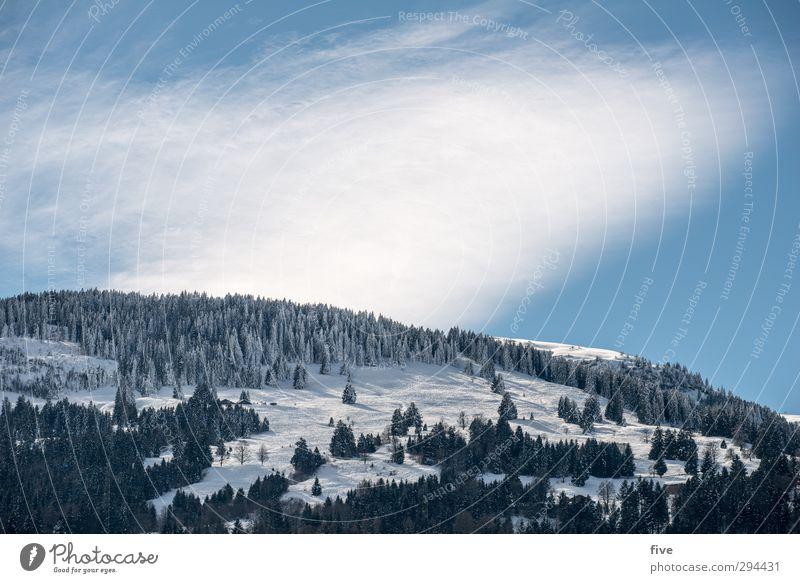 skitag Skier Skipiste Natur Landschaft Himmel Wolken Winter Schönes Wetter Pflanze Baum Hügel Felsen Alpen Berge u. Gebirge kalt Skigebiet Farbfoto