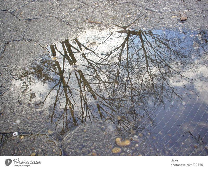 baum vs. pfuetze Wasser Himmel Baum Straße Asphalt Pfütze