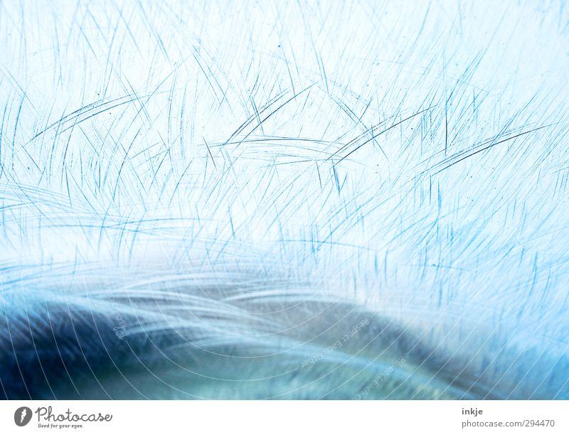 EIS [Winter kann schön sein] blau Wasser kalt Linie Eis Frost gefroren Kratzer Eisfläche verkratzt Blauton