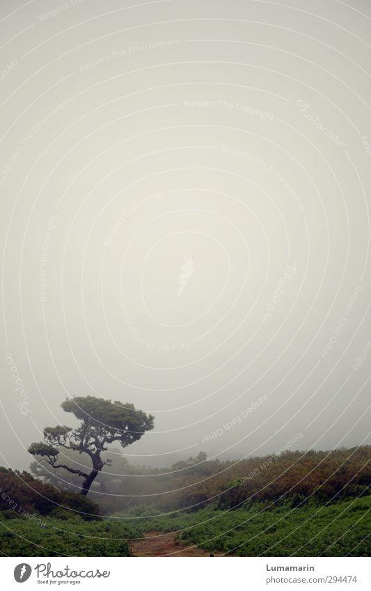 solitude Natur Ferien & Urlaub & Reisen Baum Einsamkeit Landschaft Umwelt Ferne Traurigkeit Wege & Pfade Horizont Stimmung Nebel wandern Sträucher einzeln trist