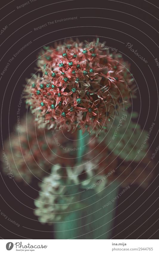_ Umwelt Natur Pflanze Frühling Blume Blüte Garten Park Duft Dekoration & Verzierung Blühend rot schön Farbfoto Gedeckte Farben mehrfarbig Textfreiraum links