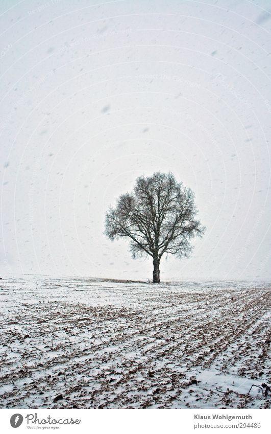 Quercus Umwelt Natur Landschaft Pflanze Winter schlechtes Wetter Eis Frost Schnee Schneefall Baum Feld frieren schwarz weiß Einsamkeit Eiche Farbfoto