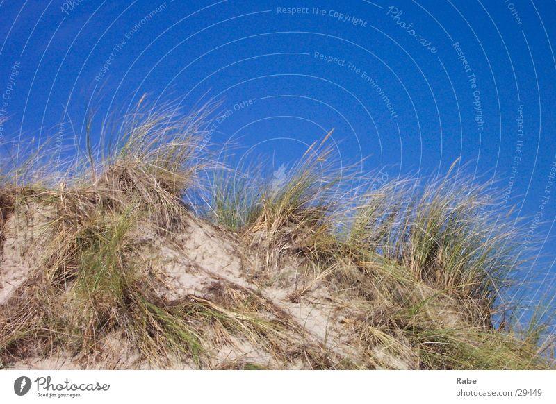Texel 2003 Meer Strand Gras Sand Insel Wolkenloser Himmel Stranddüne Nordsee Niederlande Dünengras