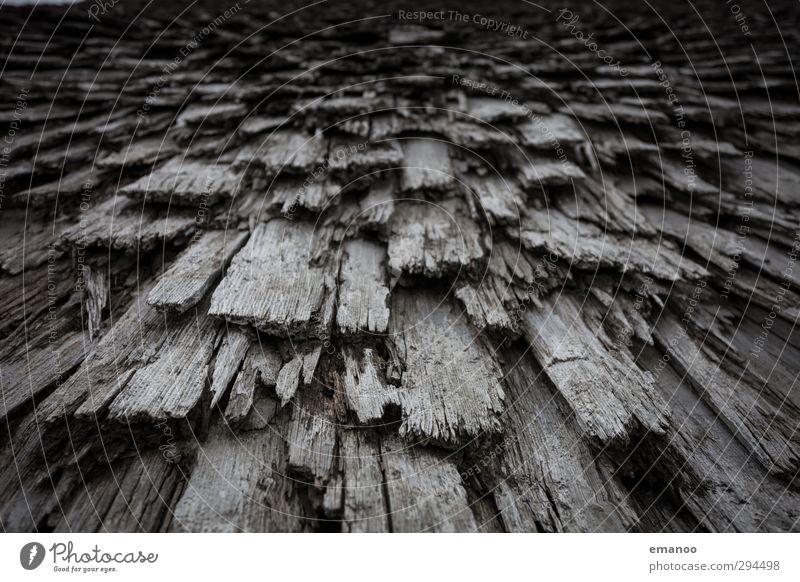 the thatcher of thatchwood Natur alt Pflanze Baum Haus dunkel Holz braun natürlich Linie authentisch Perspektive kaputt Dach Vergänglichkeit rein