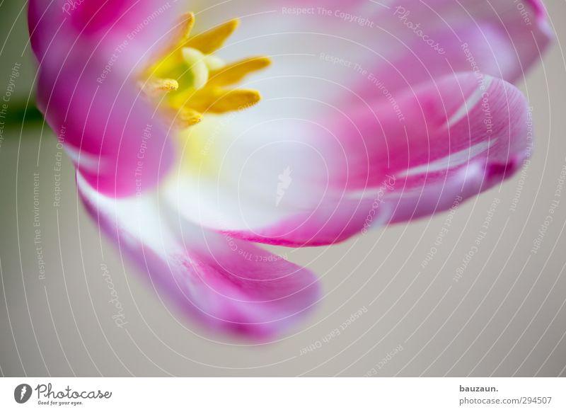 schönmalerei. Pflanze weiß Blume Blüte Stil Garten rosa Wohnung Häusliches Leben Dekoration & Verzierung elegant Geburtstag ästhetisch Blühend Romantik