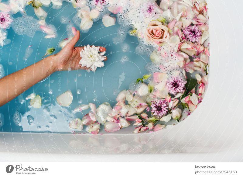 Bad mit blauem Wasser und Blütenblättern mit Frauenhand, die die Blume hält. aromatisch Kunst Schwimmen & Baden Badewanne Beautyfotografie Bombe Blumenstrauß