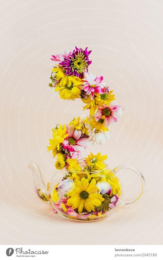 Natur Sommer Pflanze Farbe schön grün Blume gelb Blüte Frühling Dekoration & Verzierung Jahreszeiten Blumenstrauß Blütenblatt Entwurf Pastellton