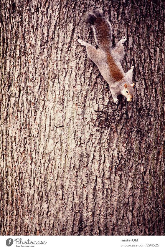 baumeln. Kunst ästhetisch Baumstamm Baumrinde Eichhörnchen Klettern Geschicklichkeit Schwerkraft Nagetiere kopfvoran geistreich Kletteranlage Kletterbaum Tier