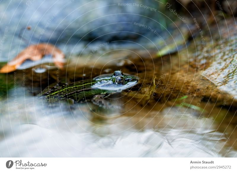 Goldauge Natur schön grün Wasser Tier Einsamkeit ruhig Umwelt Auge kalt gold Erde Wildtier einzigartig beobachten Seeufer