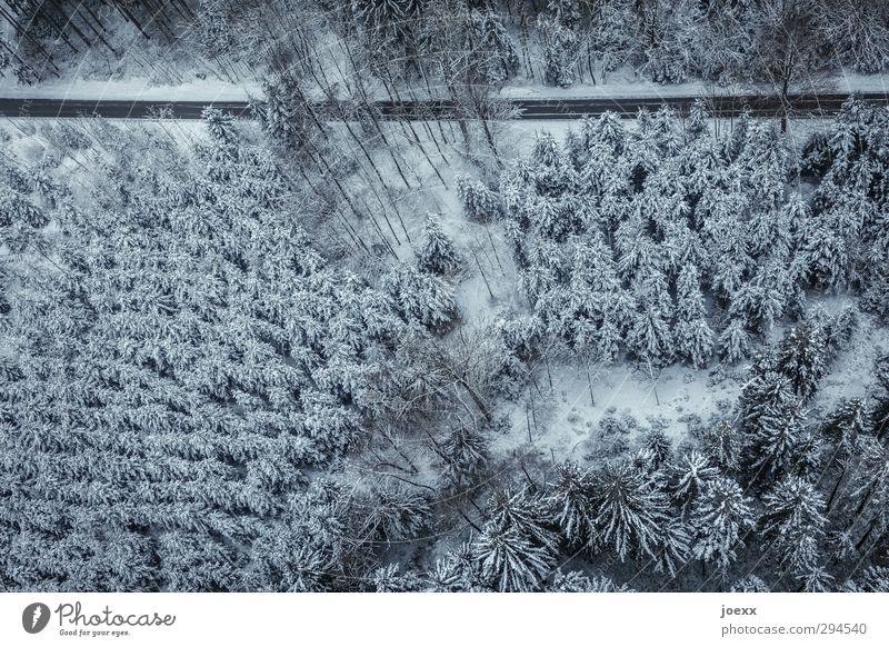 Nach nirgendwo Natur blau weiß Landschaft Winter schwarz Wald Umwelt kalt Schnee Straße Klima fahren Verkehrswege Nadelwald Winterwald