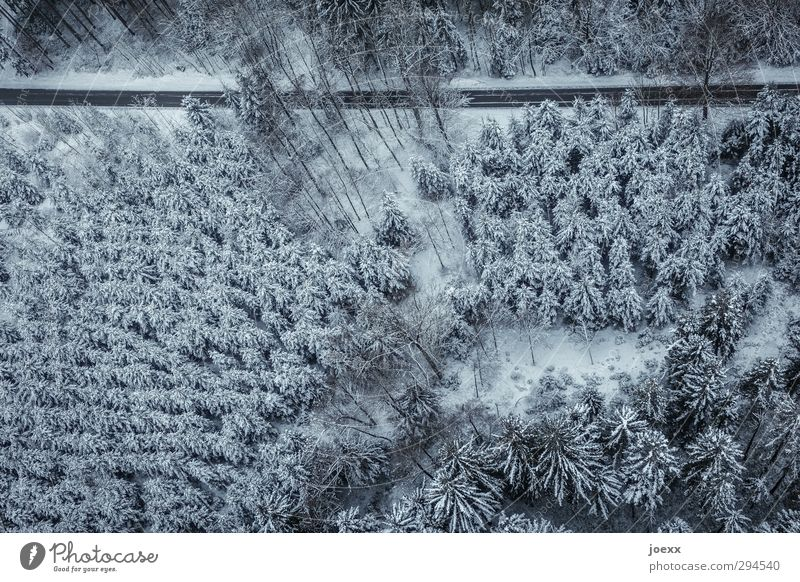 Nach nirgendwo Natur Landschaft Winter Schnee Wald Verkehrswege Straße fahren kalt blau schwarz weiß Klima Umwelt Nadelwald Winterwald Farbfoto Gedeckte Farben