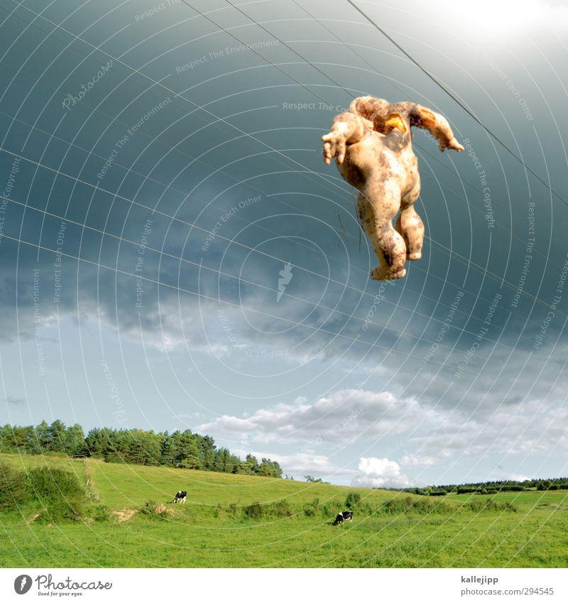 wegwerfgesellschaft Freizeit & Hobby Umwelt Natur Landschaft Klima Tier Nutztier 2 verstört Ekel Gewalt Baby Puppe Kuh Wiese Hügel Himmel (Jenseits) Leitung