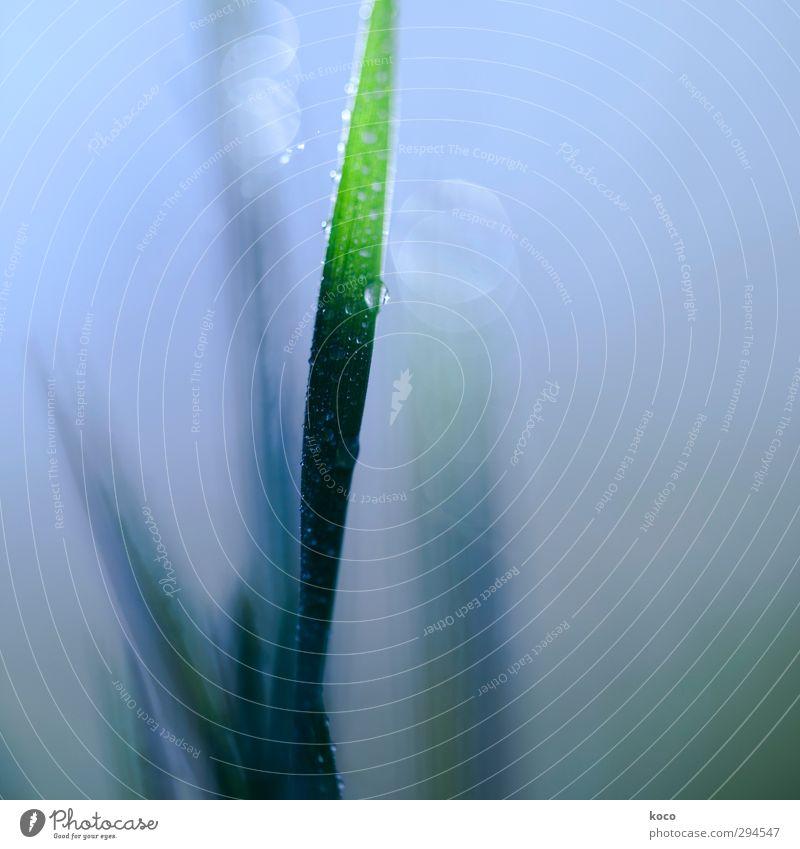 Am Morgen Himmel Natur blau grün Wasser Sommer Pflanze Blatt schwarz Gras Frühling natürlich Linie Wachstum frisch nass