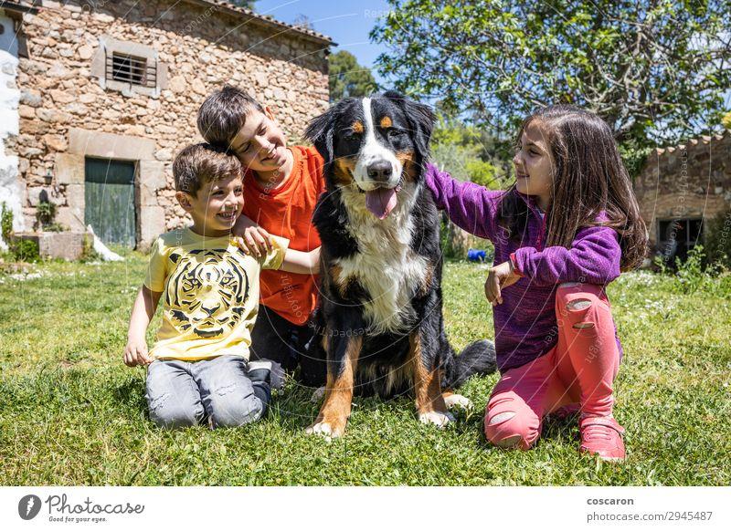 Kind Mensch Hund Jugendliche Sommer schön grün Tier Freude Mädchen Lifestyle Leben gelb Liebe Frühling feminin