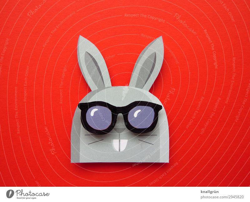 Hasenvater Tier Hase & Kaninchen 1 Sonnenbrille lustig niedlich grau rot schwarz Gefühle Freude Kreativität Hasenohren Hasenzahn Farbfoto Studioaufnahme