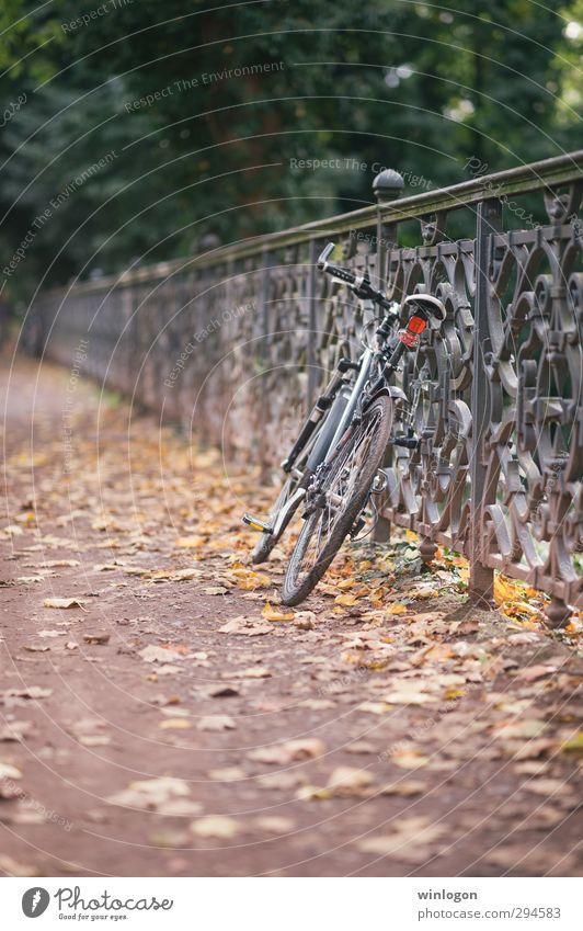 Abgestellt Freizeit & Hobby Fahrrad fahren parken Parkplatz Zaun Tourismus Ausflug Fahrradtour Landschaft Herbst Schönes Wetter Wärme Straße Blatt Herbstlaub