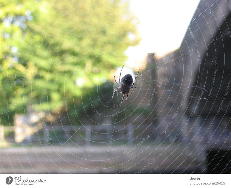 Spiderman Spinne Sommer Spinnenweben Brücke Abwasserkanal Natur