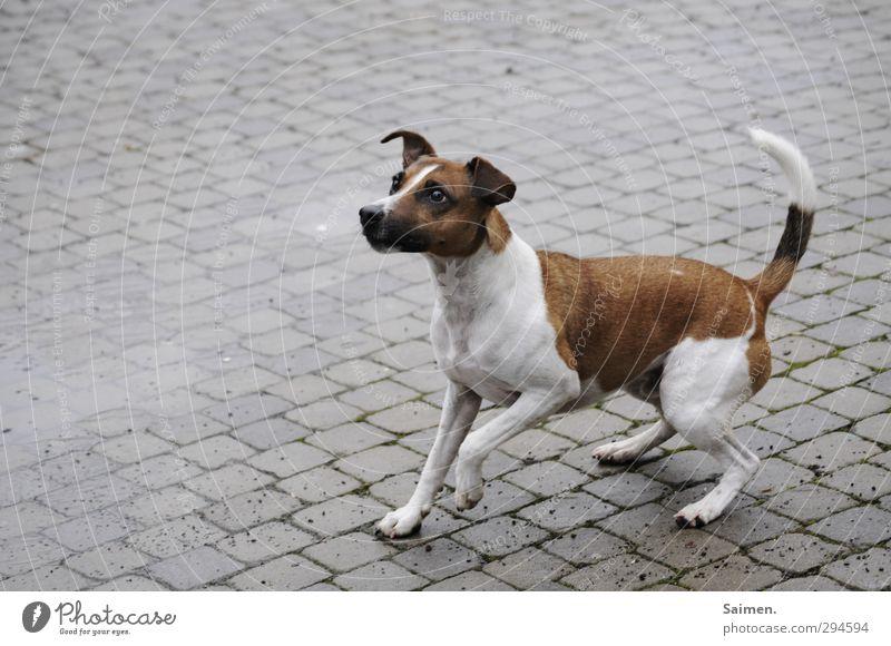 jetz wirf endlich du penner Hund Tier Spielen springen warten niedlich Neugier Fell Lebewesen Haustier Erwartung Vorfreude Hundeblick