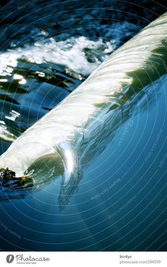 Stromschnelle Natur blau Wasser weiß Umwelt Bewegung natürlich glänzend frisch Schönes Wetter nass ästhetisch Fluss Sauberkeit rein Flüssigkeit