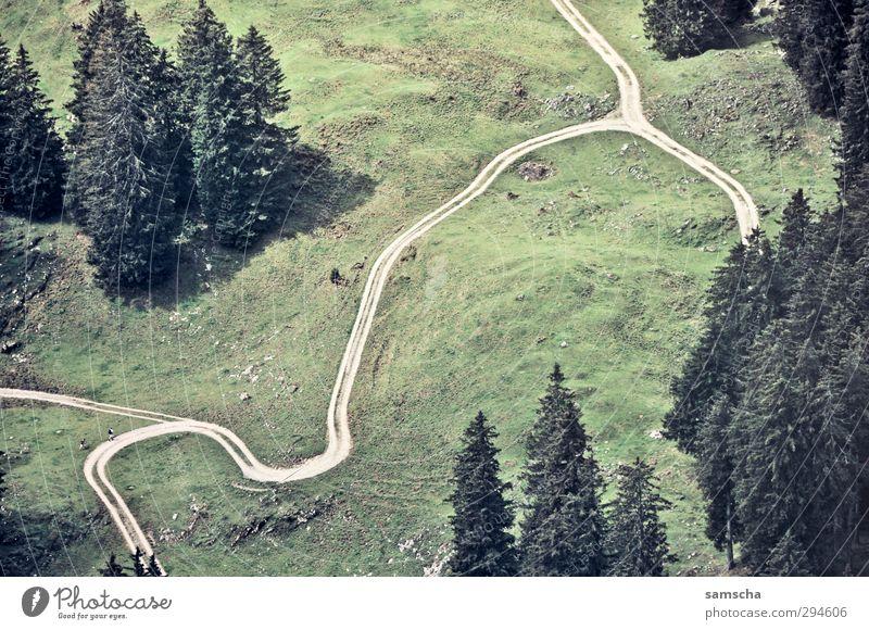 Irrweg Natur Ferien & Urlaub & Reisen grün Baum Landschaft Wald Umwelt Wiese Wege & Pfade wandern Ausflug Suche Hügel Fußweg Kurve Lebenslauf