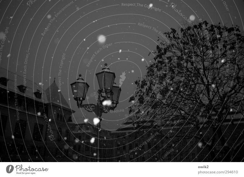 Endlich mal Schnee Umwelt Winter Klima Wetter Schönes Wetter Eis Frost Schneefall Baum Haus Bauwerk Gebäude Straßenbeleuchtung fallen glänzend leuchten dunkel