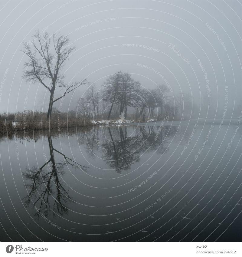 Lausitz Umwelt Natur Landschaft Pflanze Wasser Horizont Winter Schönes Wetter Nebel Baum Sträucher kahl karg Seeufer warten dunkel Unendlichkeit trist blau