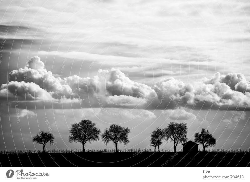 Pfalz Natur Landschaft Himmel Wolken Schönes Wetter Pflanze Baum Wiese Feld Hügel Haus Hütte Unendlichkeit Zaun Schwarzweißfoto Außenaufnahme Menschenleer Tag