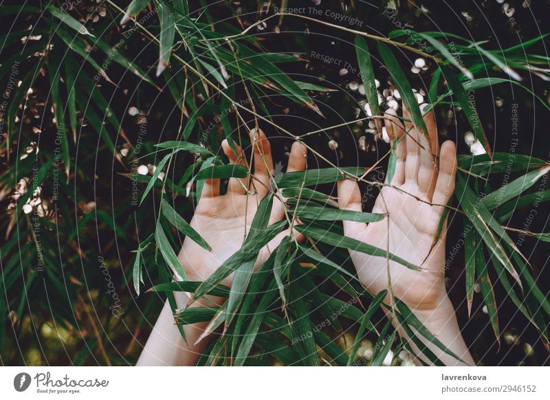 Frau Natur Sommer Pflanze grün Hand Baum Wald Hintergrundbild Garten Finger Jahreszeiten Landwirtschaft Bambus Erreichen